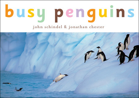 Busy Penguins by John Schindel; photographed by Jonathan Chester