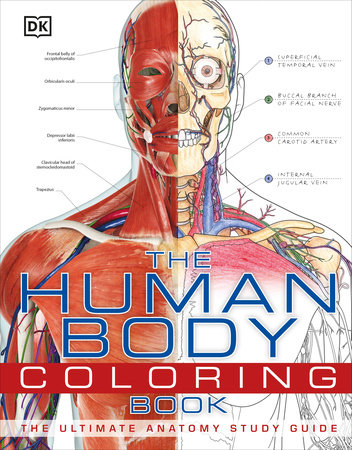 The Human Body Coloring Book by DK
