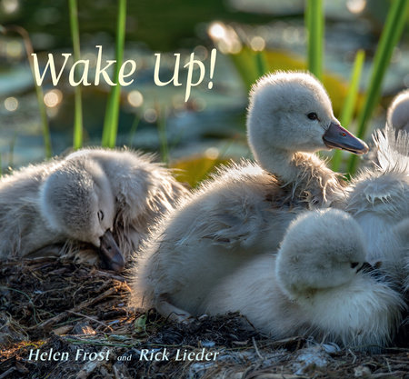 Wake Up! by Helen Frost