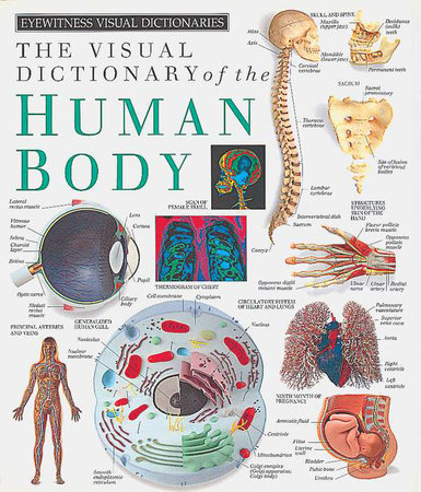 Eyewitness Visual Dictionaries: The Visual Dictionary of the Human Body by DK