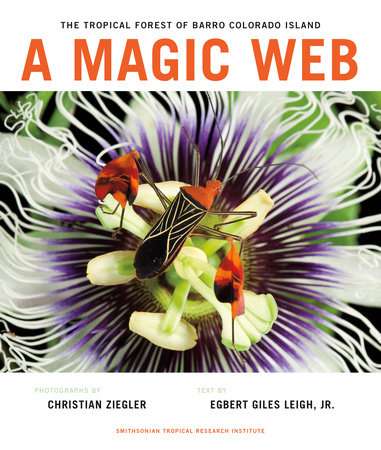 A Magic Web by
